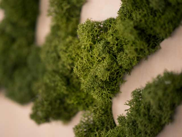 Mousse Vegetal
